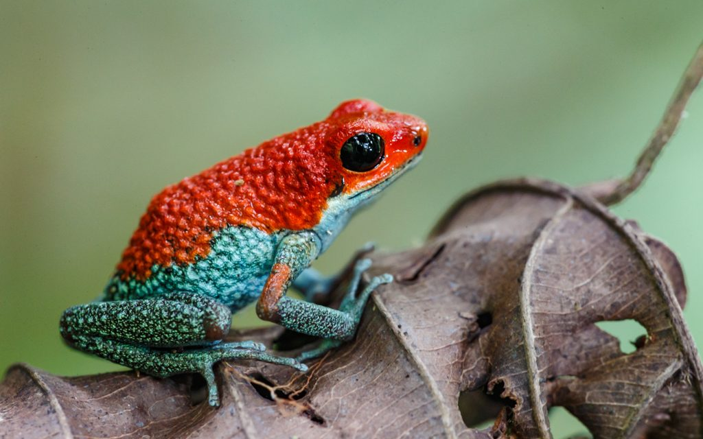 My Frog Image is Featured on Photoshelter