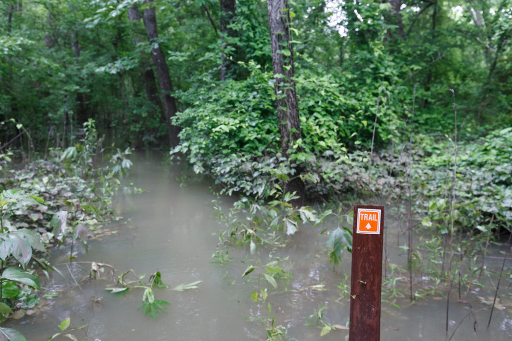 Trail sign and flooded Buckeye Trail, Great Trinity Forest, Dallas, Texas, USA