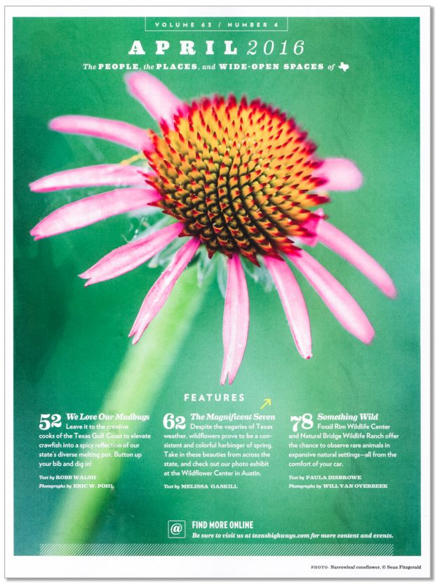 Full page image in April 2016 Issue of Texas Highways of Purple coneflower (Echinacea angustifolia DC) from Blackland Prairie at Clymer Meadow Preserve, Texas Nature Conservancy, Greenville, Texas, USA.