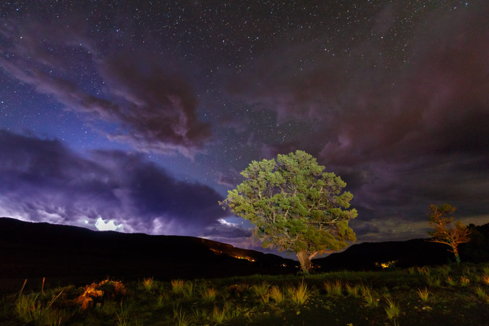 Tree framed by Lightning storm and night sky, Vermejo Park Ranch, New Mexico, USA.